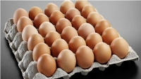 Wefi limited eggs-on-tray